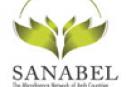 سنابل - شبكة التمويل الأصغر في البلدان العربية